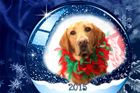 2015 12 17 Guide Dogs For The Blind